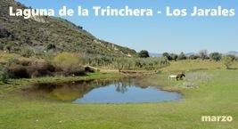 Laguna de la Trinchera - Los Jarales